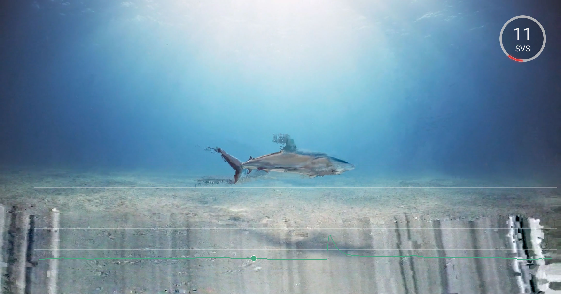 Macroblocking affect on a shark underwater